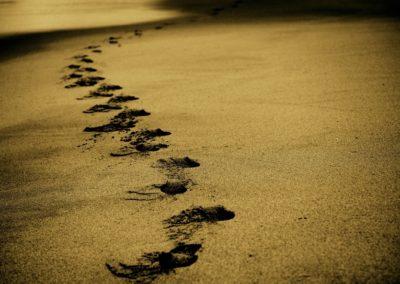 SD Worx: Ecologische voetafdruk